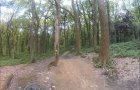 Clyne Forest Mountain Biking, Swansea