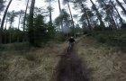 Smilog Forest