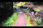 MTB - Kielder forest Deadwater black route part 1 Contour HD