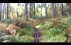 The good the great and the rooty mountain bike Drumlanrig