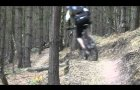 The Monkey Trail Cannock Chase