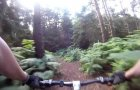 Rushmere Country Park MTB Trail
